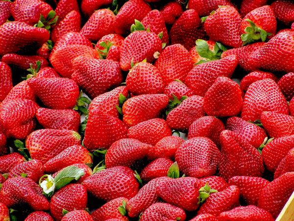 全面にイチゴが並ぶ写真
