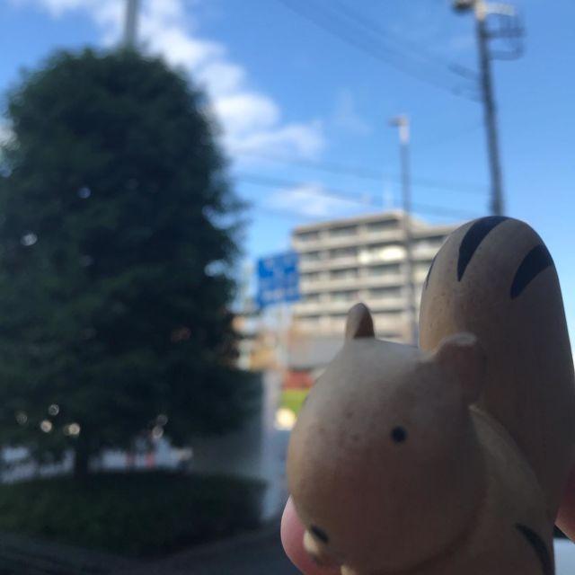 最近Twitterで#企業公式が毎朝地元の天気を言い合う というハッシュタグにハマっています。  全国の同じ時間のお天気が画像付きで見れるなんて、なんだかロマンも感じます。  #トリガーコーポレーション #埼玉県志木市 #今日は晴れ